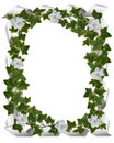 Ivy border with gardenias Royalty Free Stock Photo