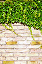 Ivy and brick wall Royalty Free Stock Photography