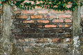 Ivy on brickwall Royalty Free Stock Photo