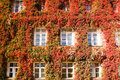 Ivy on a building Royalty Free Stock Photo