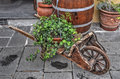 Ivy on a cart Royalty Free Stock Photo