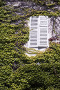 Ivy clad house, white window Royalty Free Stock Photos