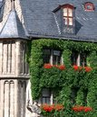 Ivy clad old building in germany Stock Images
