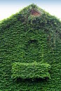 Ivy covered building Royalty Free Stock Photo