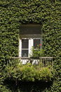 Ivy Covered House Detail Stock Photos