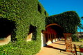 Ivy covered walkway beckons the adventurous Royalty Free Stock Photo