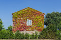 Ivy creeper house Royalty Free Stock Photo