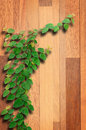 Ivy fixing climbing tree on brown wood texture Stock Image