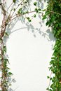 Ivy Frame and White Wall Stock Image