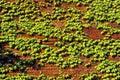 Ivy growing on brick wall beacon hill boston ma Royalty Free Stock Photo
