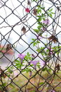 ivy intertwined mesh fence Royalty Free Stock Photo