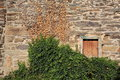 Ivy over stone wall Royalty Free Stock Images