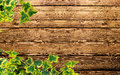 Ivy plant background Royalty Free Stock Images