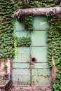 Ivy plant on the rusted iron door Royalty Free Stock Photography