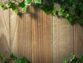 An ivy plant on a table of hardwood wooden board covered in Stock Images