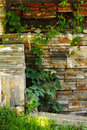 Ivy and stone wall