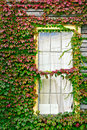 Ivy Surrounding Window Royalty Free Stock Photography