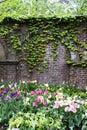 Ivy Wall Garden