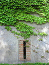 Ivy wall and shutter Stock Photography
