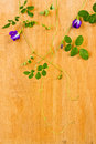 Ivy on wood table and flower Royalty Free Stock Image