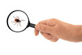 Ixodes scapularis black legged deer tick under magnifying glass can carry disease common on dogs and cats Stock Image