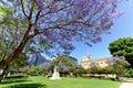 Jacaranda near university of Adelaide and univeristy of south australia