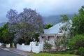Jacaranda tree home Cape South Africa Stock Photo