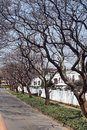 Jacaranda trees along the side of the road in Johannesburg Royalty Free Stock Photo