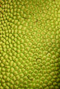 Jack fruit texture Stock Images