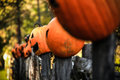 Jack o lanterns fence resting and rotting on a country during the halloween autumn season Royalty Free Stock Images