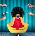 Dog at beauty salon Royalty Free Stock Photo