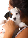 Jack russell puppy with your owner on white background Stock Image