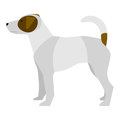 Jack russell terrier vector illustration of hunting dog on white background Royalty Free Stock Photos