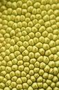 Jackfruit skin texture Royalty Free Stock Photos