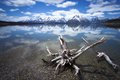 Jackson lake driftwood along the shoreline in wyoming with moving clouds in a blue sky Royalty Free Stock Image