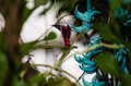 Jade vine wild colorful forest Royalty Free Stock Image