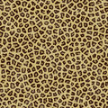 Jaguar Texture Background Fur