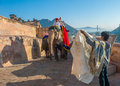 Jaipur rajastan india january decorated elephant at amb amber fort on december in rajasthan Royalty Free Stock Images