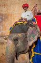 Jaipur rajastan india january decorated elephant at amb and its mahout amber fort on december in rajasthan Stock Photography