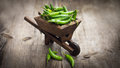 Jalapenos chili pepper in a miniature wheelbarrow green on wood background Royalty Free Stock Images
