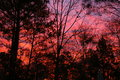 January sunrise a beautiful colorful looking through trees Royalty Free Stock Photography