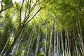 Japan bamboo Stock Image