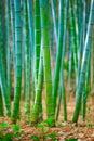 https---www.dreamstime.com-stock-illustration-green-bamboo-trees-inside-forest-illustration-background-frame-image106979158