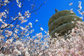 Japan Center Peace Pagoda & Cherry Blossom Stock Photos