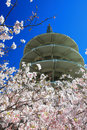 Japan Center Peace Pagoda & Cherry Blossom Royalty Free Stock Photo