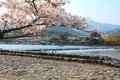 Japan cherry blossom and oi river in arashiyama kyoto japanese view Royalty Free Stock Photo