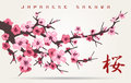 Japan cherry blossom tree branch Royalty Free Stock Photo