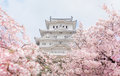 Japan Himeji castle , White Heron Castle in beautiful sakura che Royalty Free Stock Photo