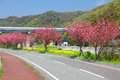 Japan himeji kansai region rural road with cherry trees sprintime view Stock Photography