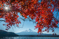 Japan Mount Fuji and Kawaguchiko Lake Autumn Postcard View with Maple Red Color Leafs Royalty Free Stock Photo